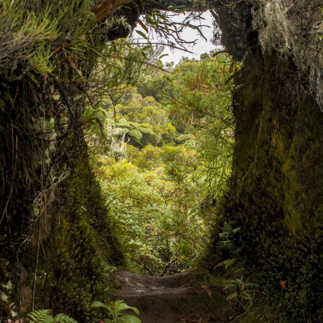 vegetation52-foret-de-la-roche-ecrite-credit-irt-yabalex-dts-07-2024.jpg
