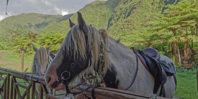 balade-a-cheval-et-dejeuner-pl-des-palmistes-irtla-petite-creole-2-1.jpg