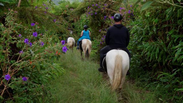 balade-a-cheval-et-dejeuner-pl-des-palmistes-irtla-petite-creole.jpg