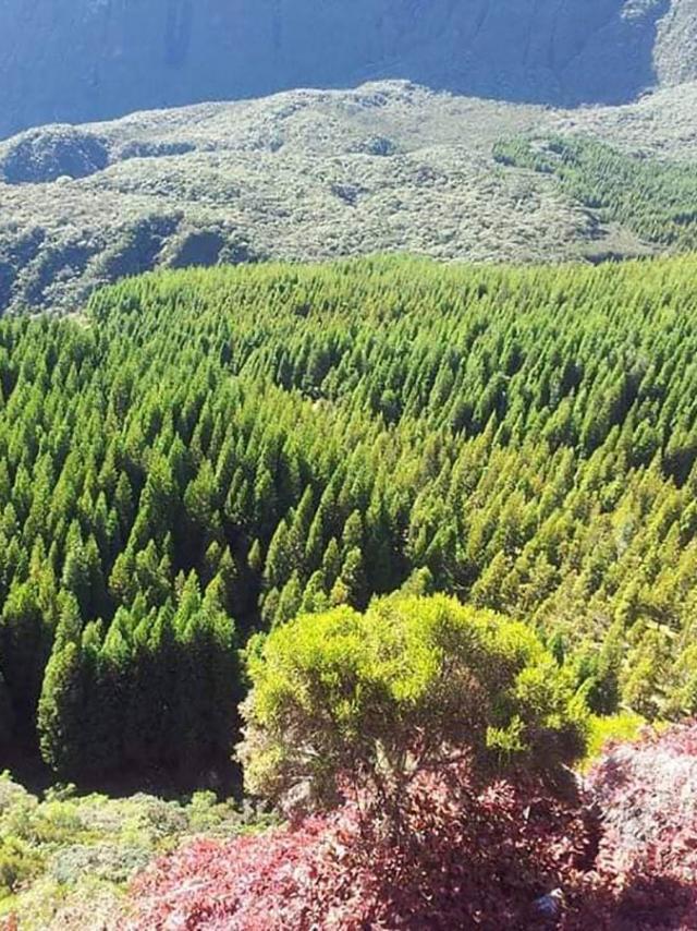 Montagne Mafate98