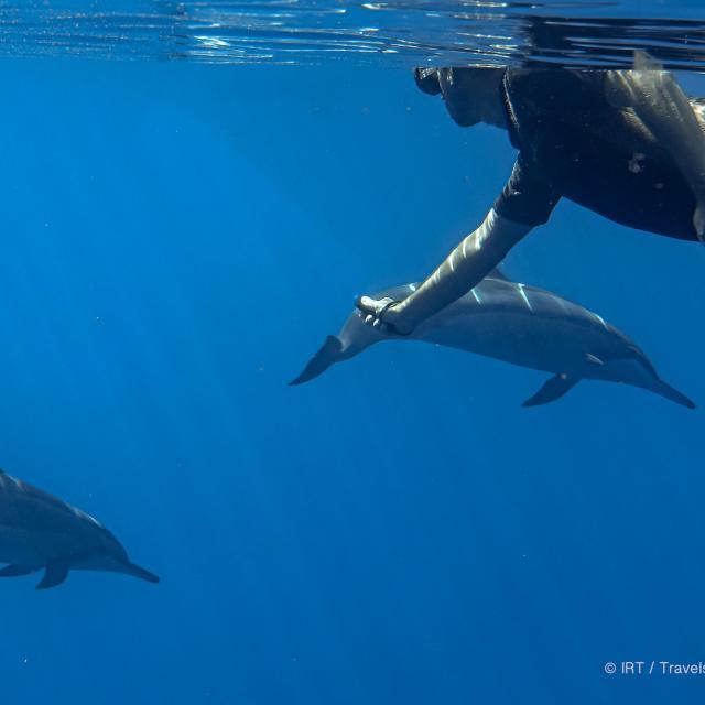 rencontre-avec-les-dauphins-irttravels-gallery-dt-2031-8-1.jpg
