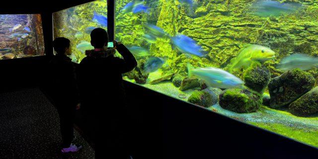 Deux garçons en contre-jour admirant un aquarium de poissons de la Manche