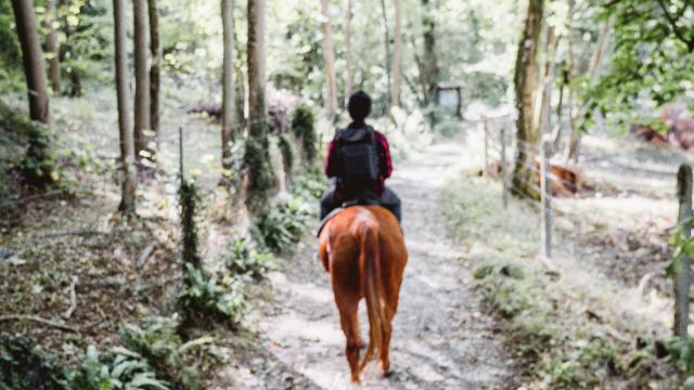 Deux promeneurs à cheval dans un sentier du Bois de Bernouville.