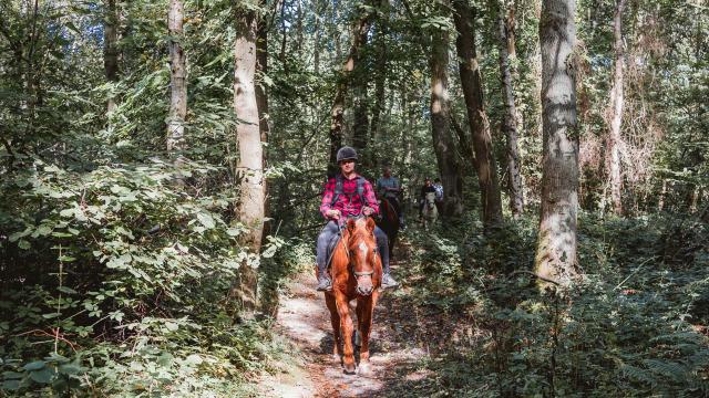 Promeneurs à cheval dans le Bois de Bernouville
