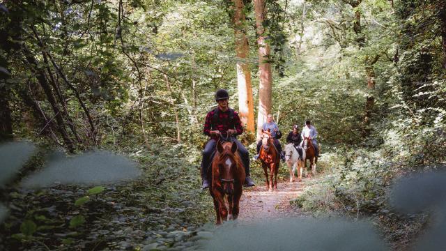 Quatre promeneurs à cheval dans le Bois de Bernouville.