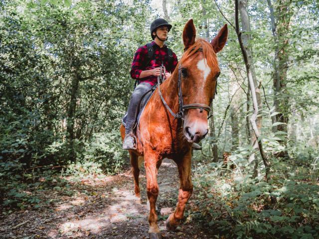Jeune homme à cheval dans le bois de Bernouville.