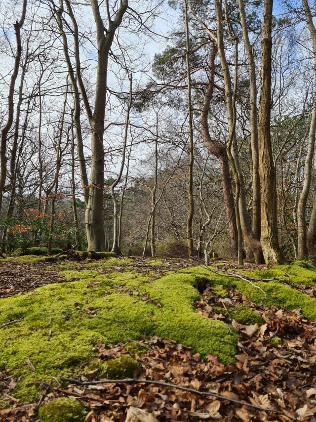 Paysage de bois en hiver, tapis de mousse au sol