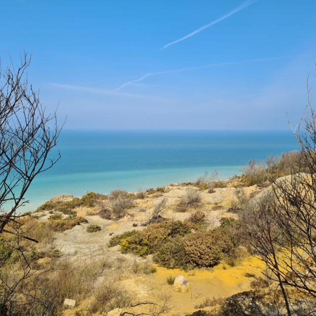 Végétation hivernale et vue la mer à l'horizon