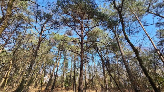 Vue en contre-plongées sur des arbres