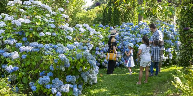 Famille de 5 personnes contemplant un massif d'hortensias bleu à la collection Shamrock