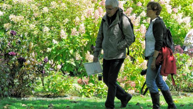Couple se promenant devant un massif d'hydrangéas aux teintes roses