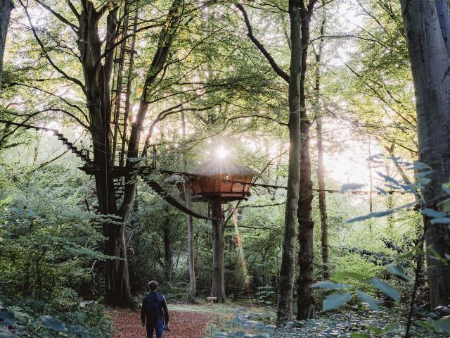 Cabane dans les arbres dans une forêt.
