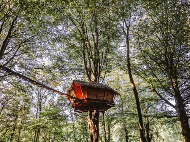 Cabane suspendue dans un arbre dans une forêt.