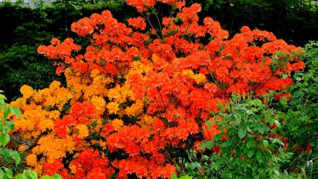 Massif de fleurs aux couleurs rouges et oranges vifs