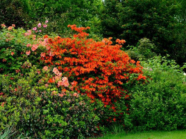 Buisson de fleurs rouges-orangées au Parc William Farcy d'Offranville