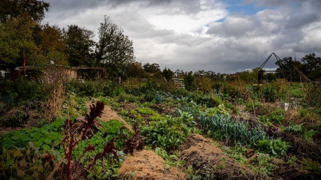 Vue de la permaculture Nouvelles Elégances