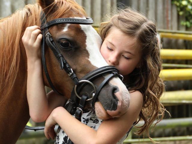 Petite fille enlaçant le museau d'un poney marron et blanc