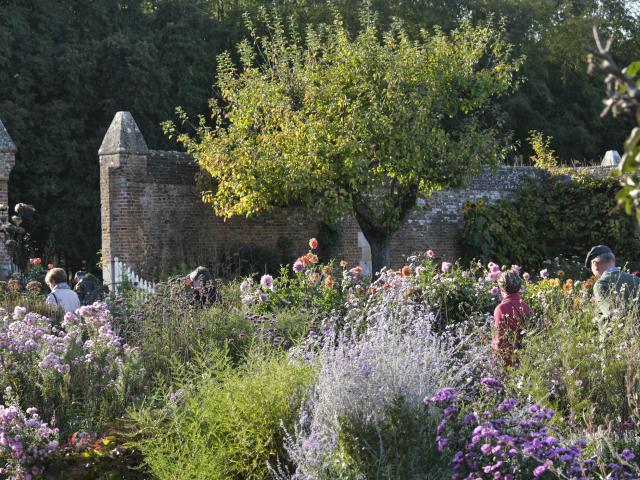 Buissons de fleurs aux nuances violettes, personne se baladant dans la travée, arbre fruitier à l'arrière-plan