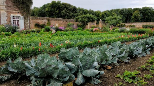 Vue sur la rangée de choux de Saint-Saëns, autre rangées de fleurs et légumes en arrière-plan, vue sur le mur d'enceinte en briques orangées du potager