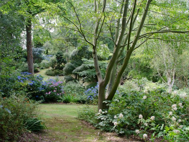 Paysage verdoyant, buissons de fleurs roses, bleues et blanches