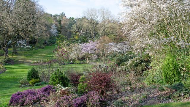 Vue dégagée sur le jardin, herbe verte, massifs de fleurs aux teintes violettes