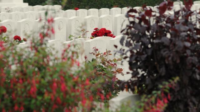 Tombes blanches entourées de fleurs rouges
