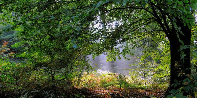 Clairière sous un arbre verdoyant