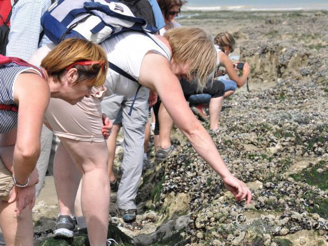 Groupe de femmes ramassant des coquillages entre les rochers sur la plage de Dieppe