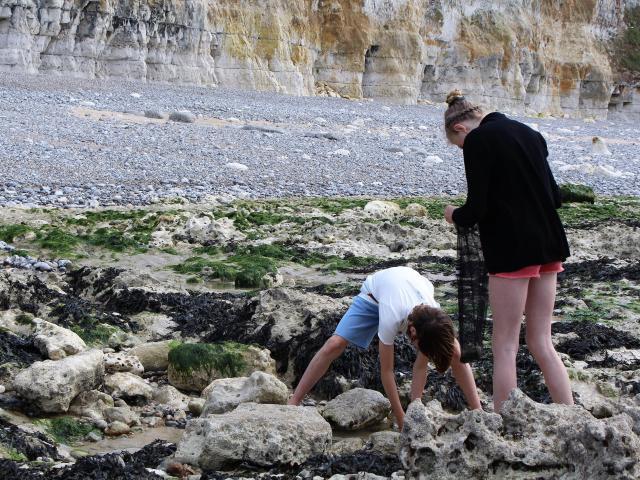 Un jeune homme et une jeune fille ramassent des coquillages entre les rochers sur la plage de Dieppe