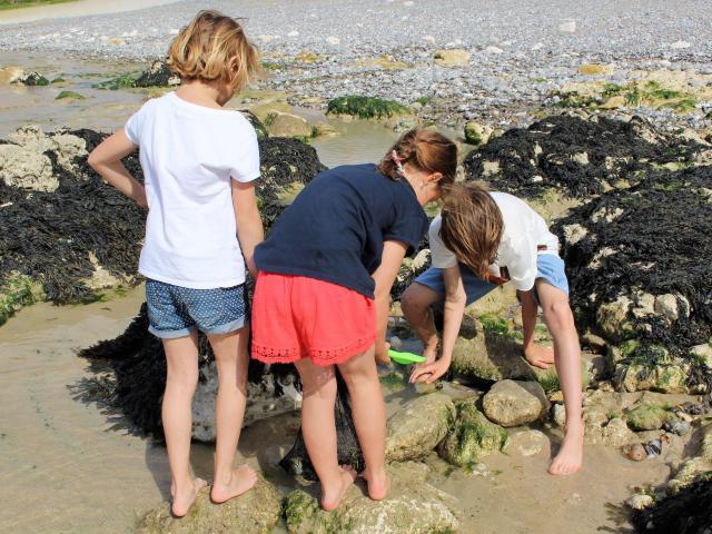 Trois petites filles ramassent des coquillages entre les rochers sur la plage de Dieppe à marée basse