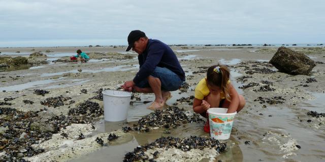 Un homme et une petite fille ramassent des coquillages dans les rochers sur la plage à marée basse