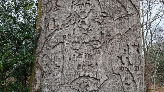 Gravure sur un arbre d'une femme portant une amphore sur la tête
