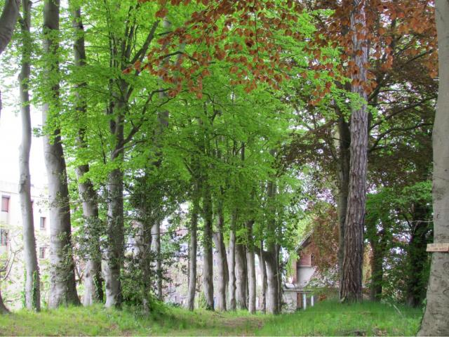 Domaine Des Roches Dieppe 3