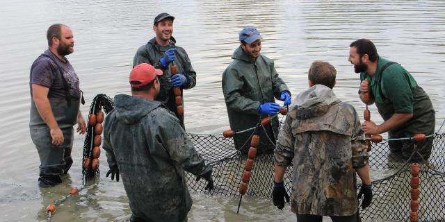 Pêche d'étang en Dombes