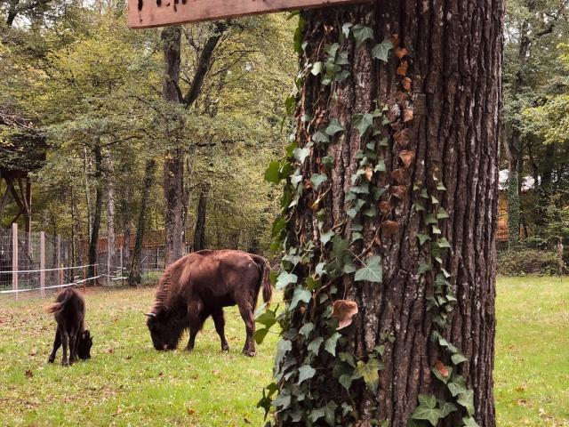 Parc animalier du Domaine de la Dombes