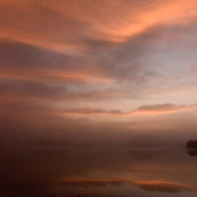 L'Aube au bord d'un étang de la Dombes