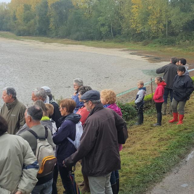 Pêche d'étang commentée - Journées Poissons de Dombes