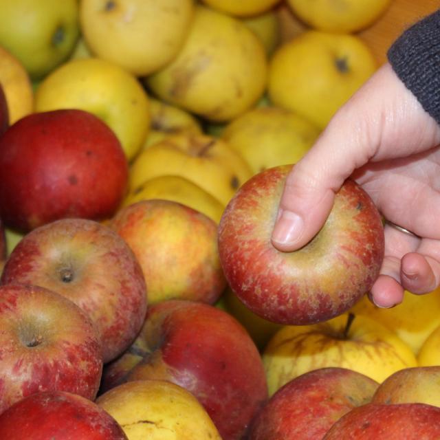 Pommes de l'Abbaye Notre Dame des Dombes