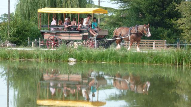 Balade en calèche au bord des étangs de la Dombes