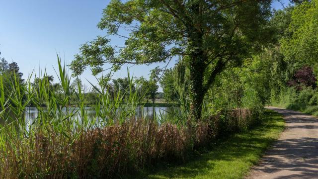 Balade aux bords des étangs de la Dombes proche de lyon