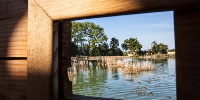 Vue de l'observatoire de l'étang Prele