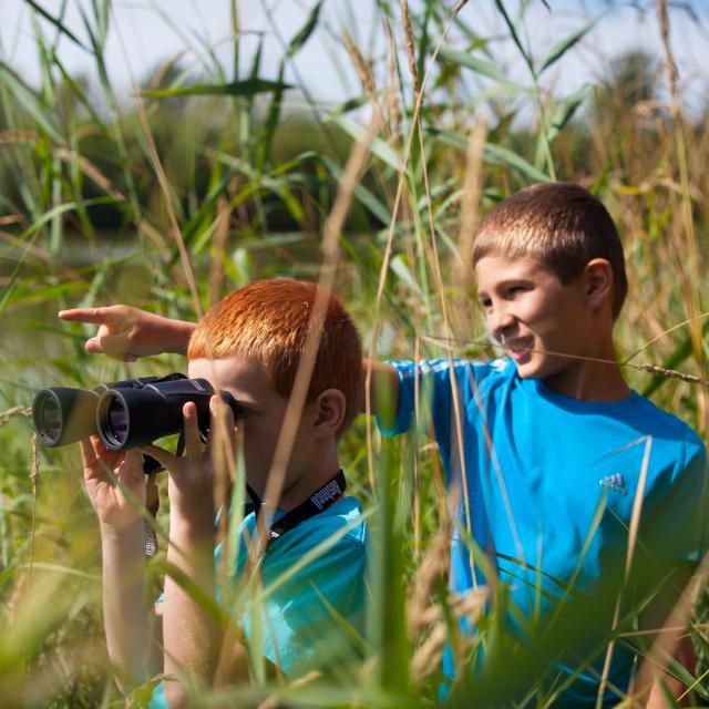 Observation des oiseaux et promenade au bord des etangs de la Dombe, Ain.