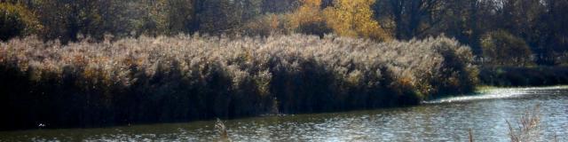 Etang Turlet à Villars les Dombes