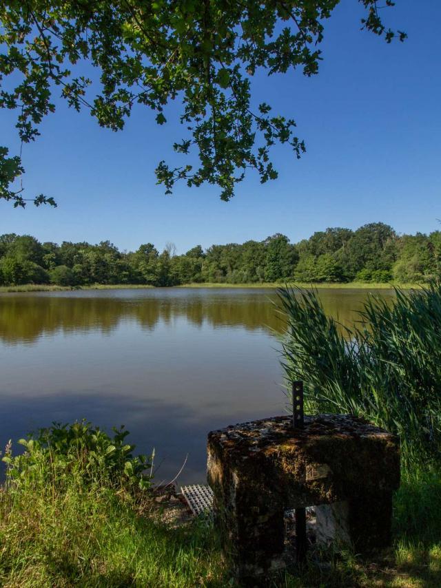 Thou et étang sur un circuit de randonnée en Dombes
