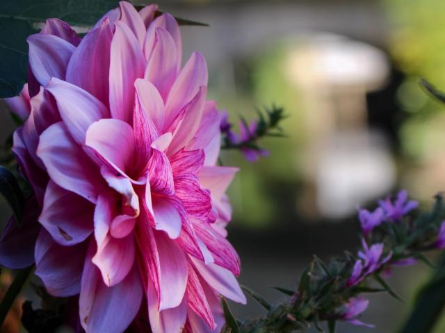Fleurissement de Chatillon Sur Chalaronne