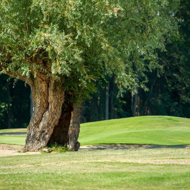 Golf Sorelle