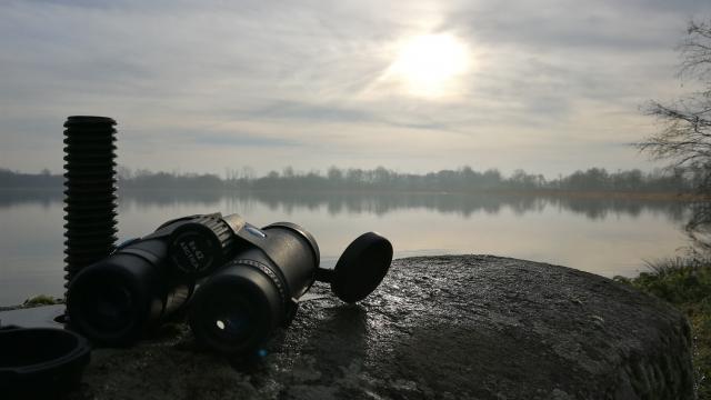 Observation au bord d'un étang en Dombes
