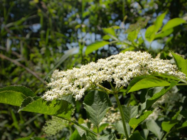 Flore Dombiste - Balade des étangs