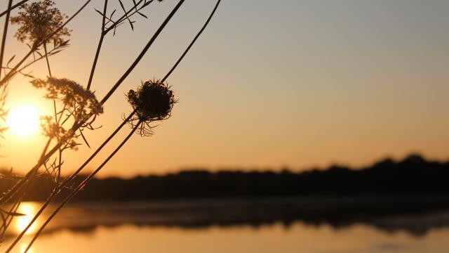 Lever de soleil sur un étang de la Dombes