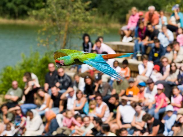 Spectacle d'oiseaux en plein vol au Parc des oiseaux